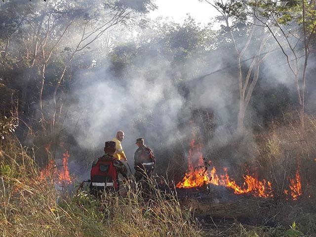 Les broussailles en feu