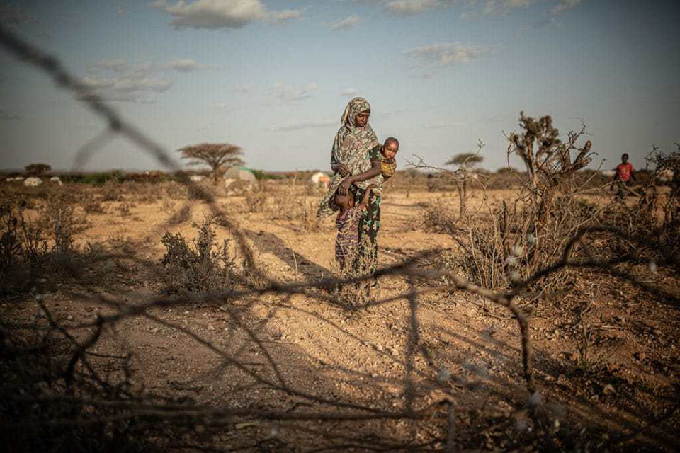 Horn of Africa hunger (locusts)